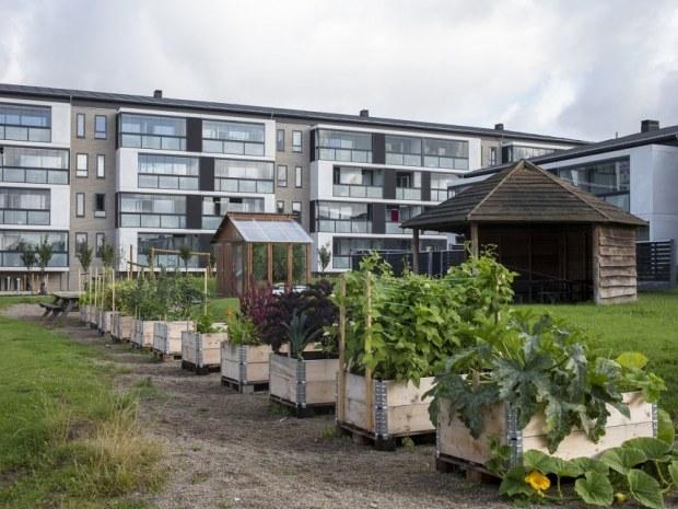 Grønnedalsparken - beplantning