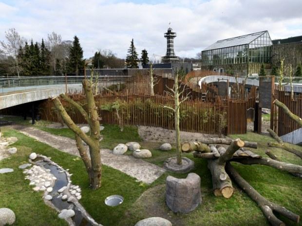 Pandaanlægget - klatretræ